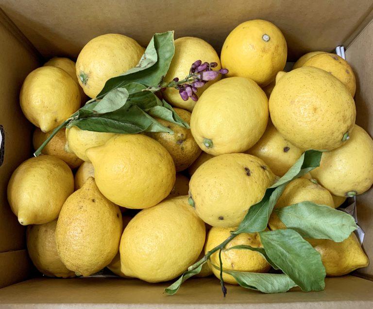 メルカリでレモン購入
